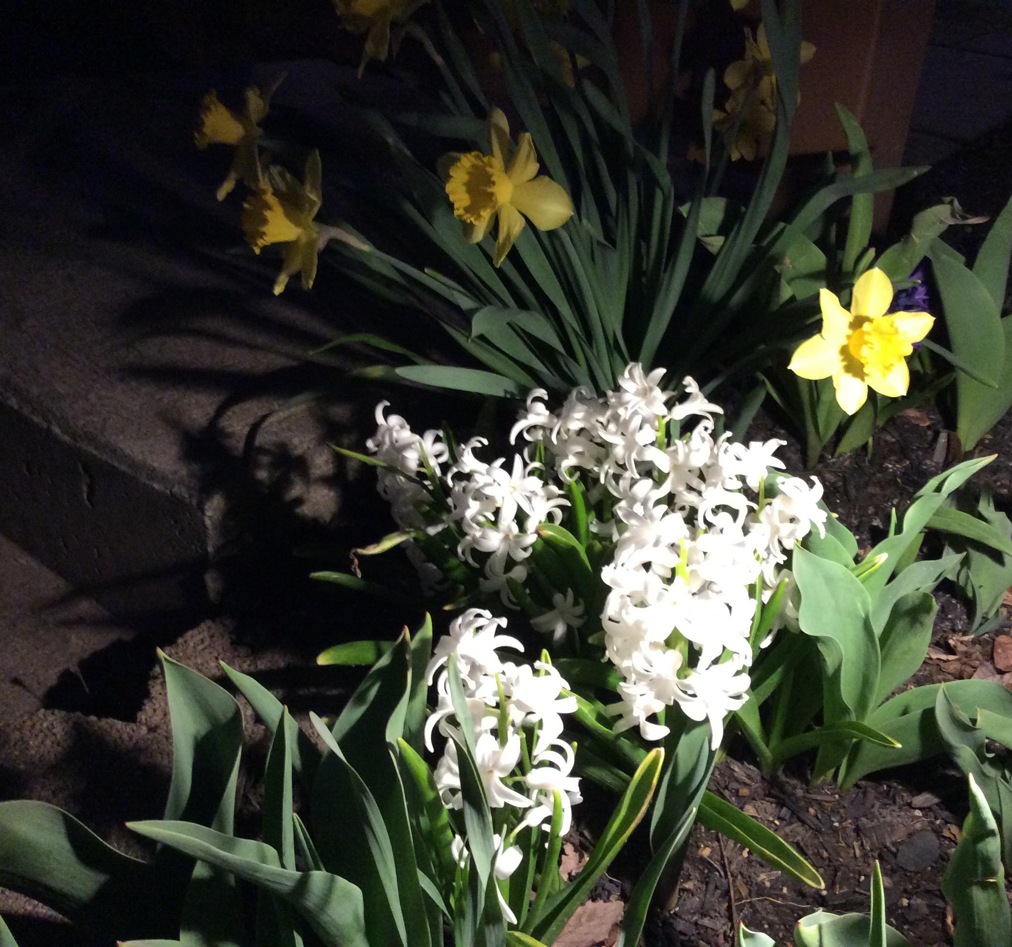 Spring at Night