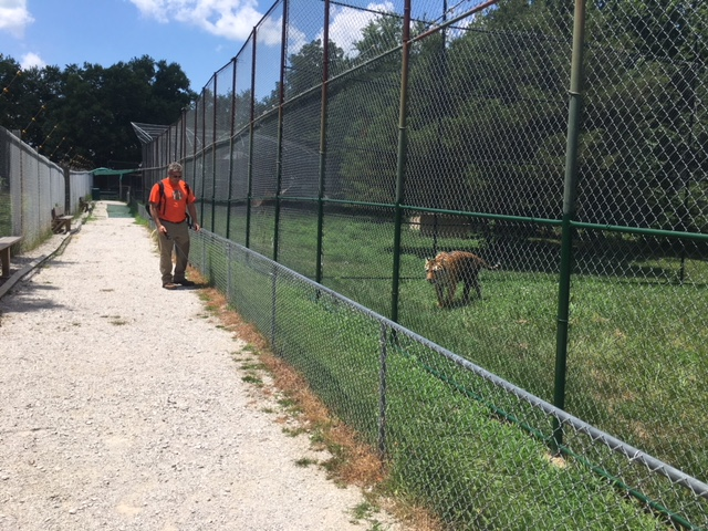 Big Cats in KC: new branch takes on CommunityCare