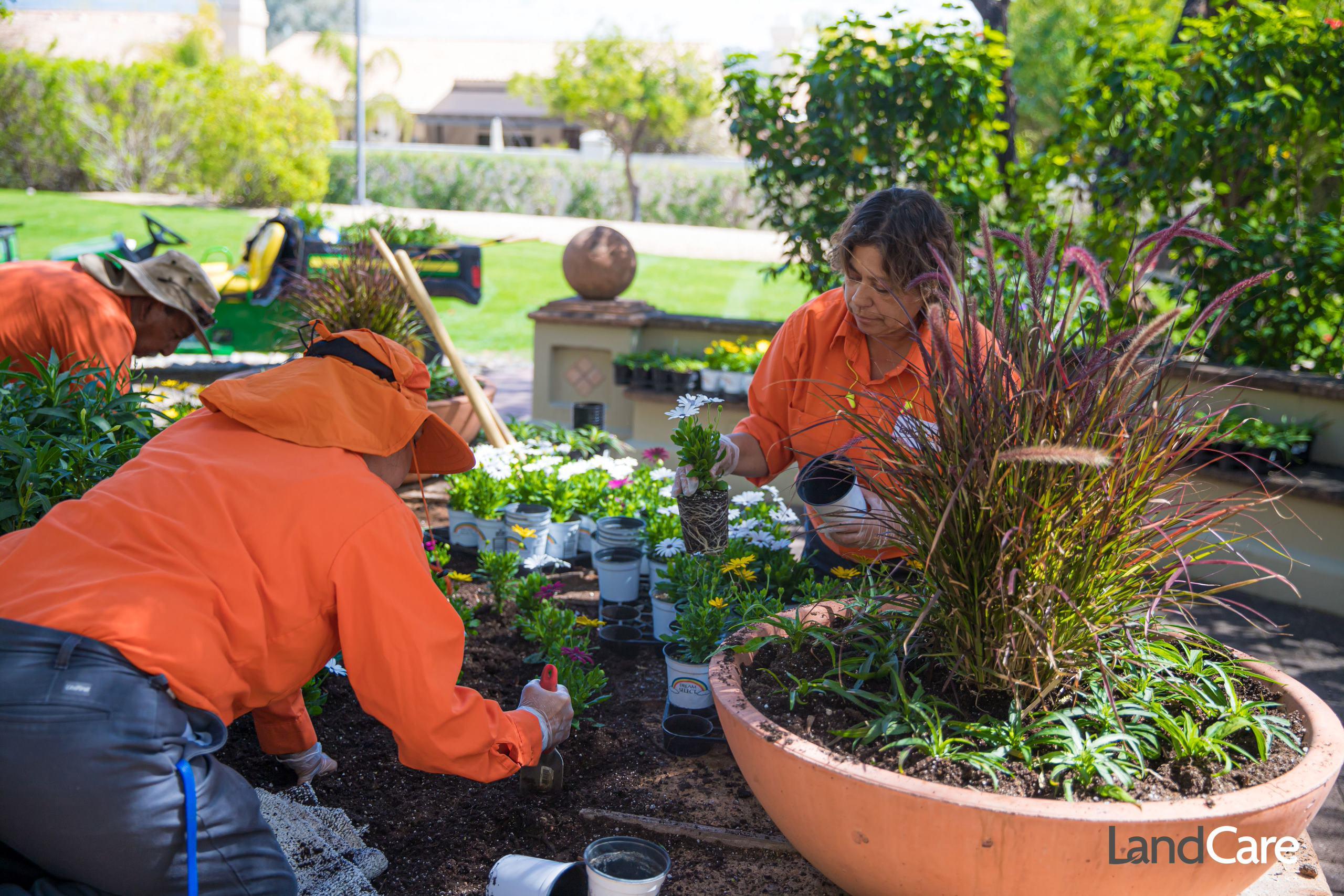 Landscape Maintenance: Summer Tips